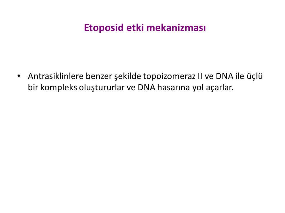 Etoposid etki mekanizması