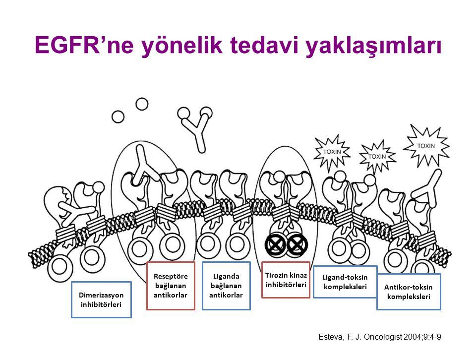 EGFR'ne yönelik tedavi yaklaşımları