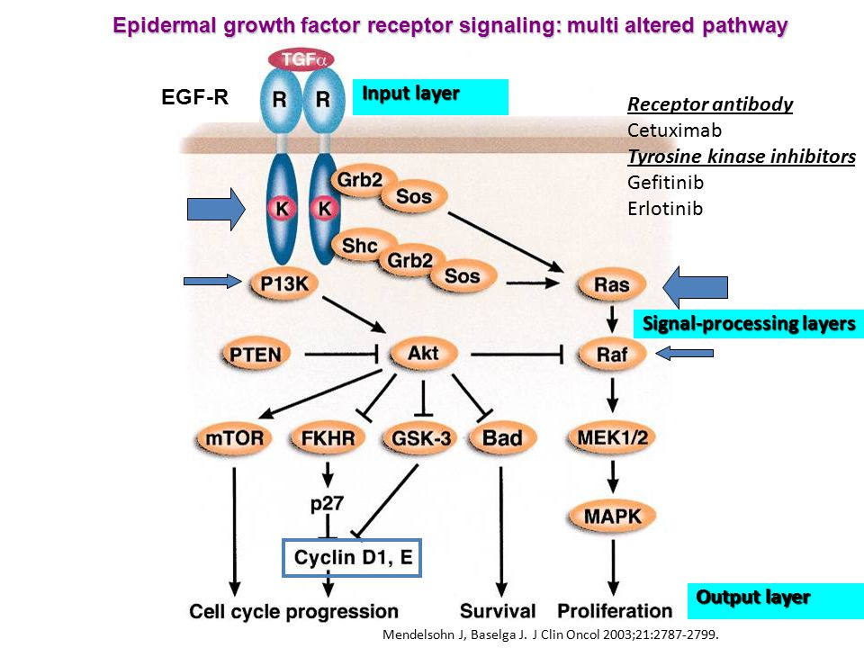 Epidermal growth factor receptor signaling: multi altered pathway