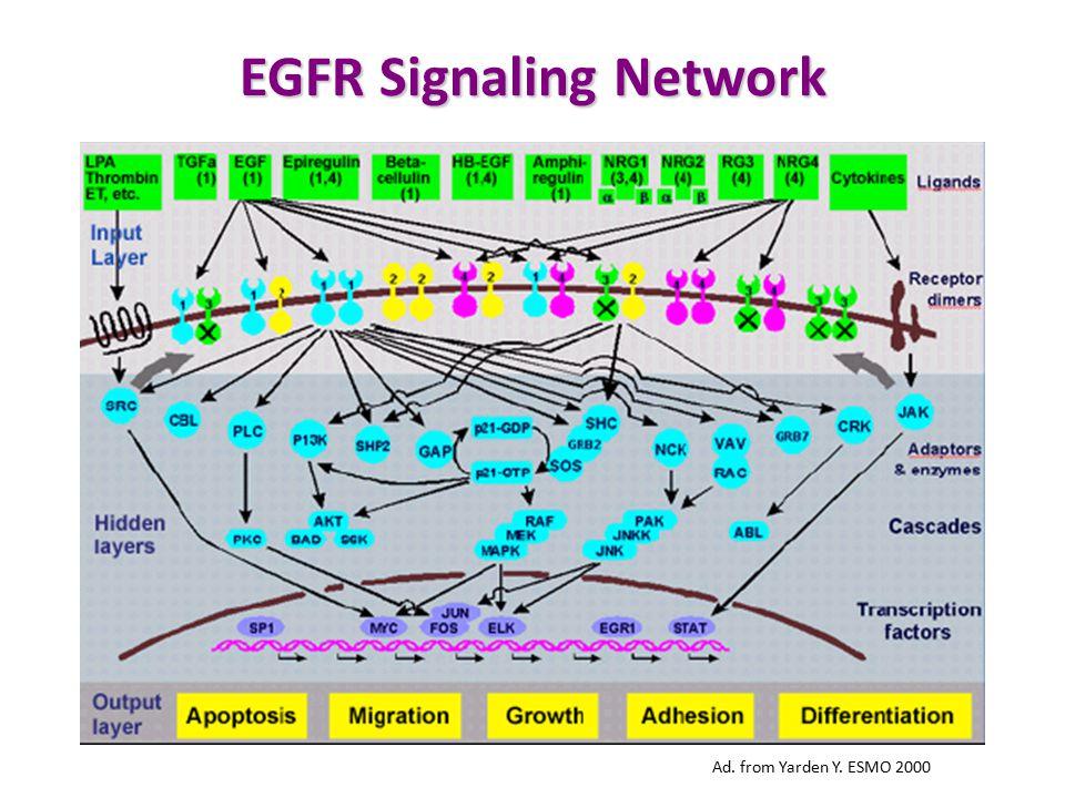 EGFR Signaling Network