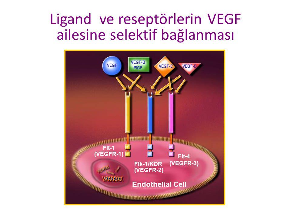 Ligand ve reseptörlerin VEGF ailesine selektif bağlanması