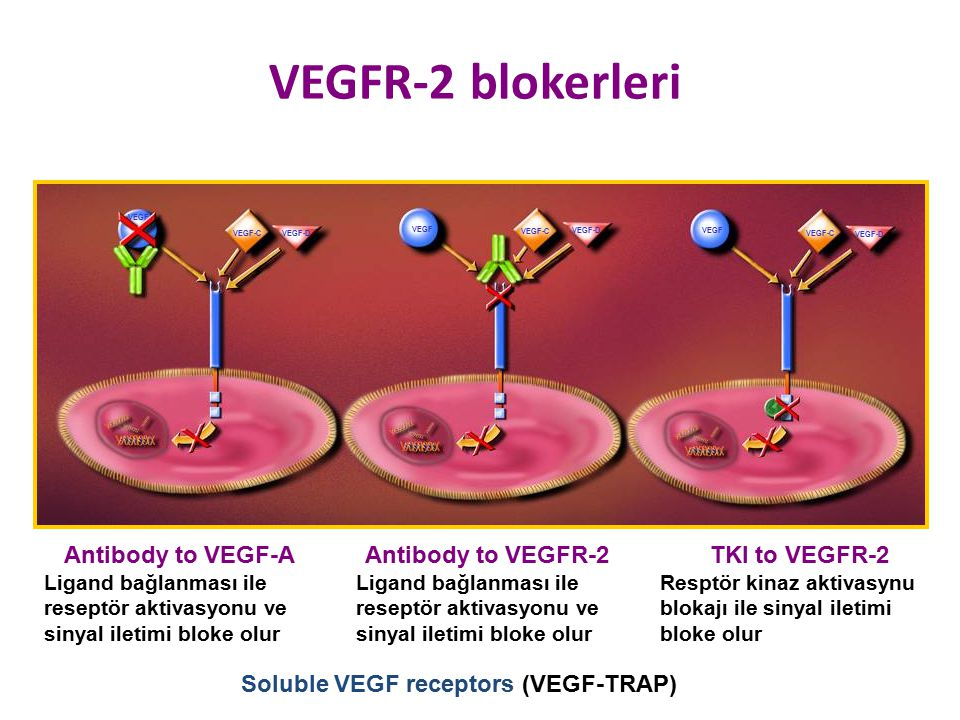 Soluble VEGF receptors (VEGF-TRAP)