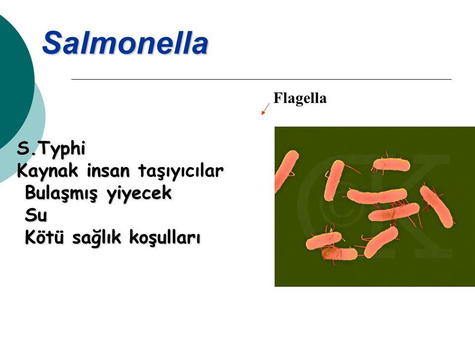 Salmonella S.Typhi Kaynak insan taşıyıcılar Bulaşmış yiyecek Su