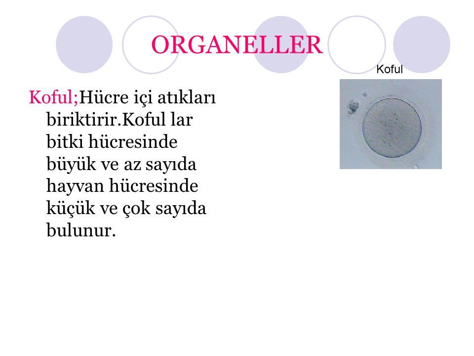 ORGANELLER Koful.