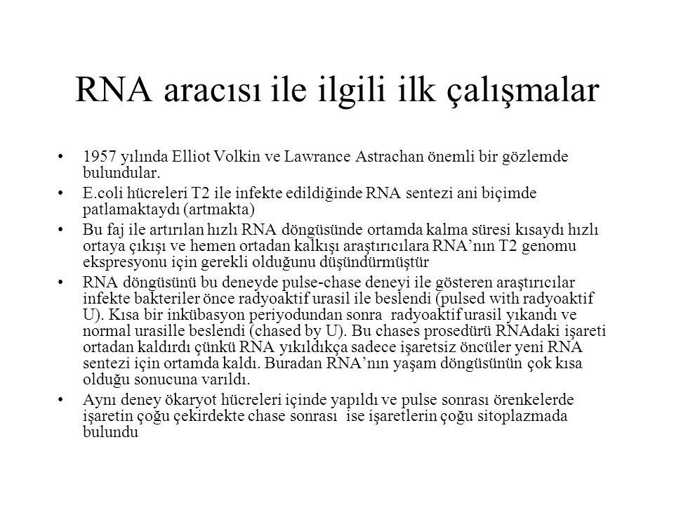 RNA aracısı ile ilgili ilk çalışmalar