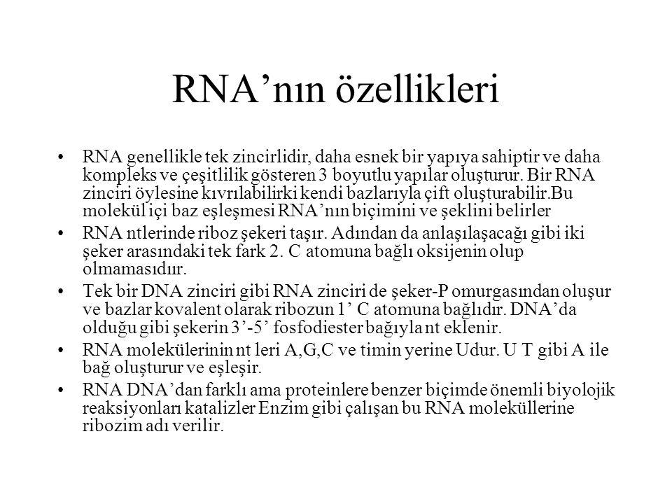 RNA'nın özellikleri