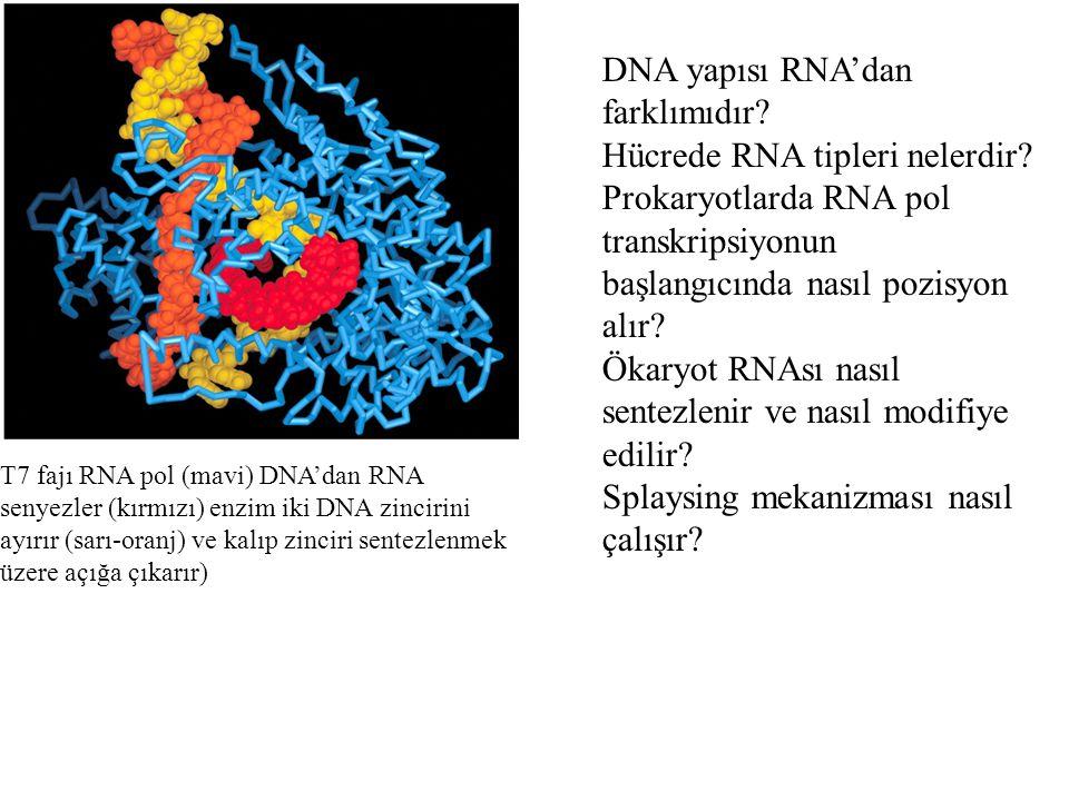 DNA yapısı RNA'dan farklımıdır Hücrede RNA tipleri nelerdir