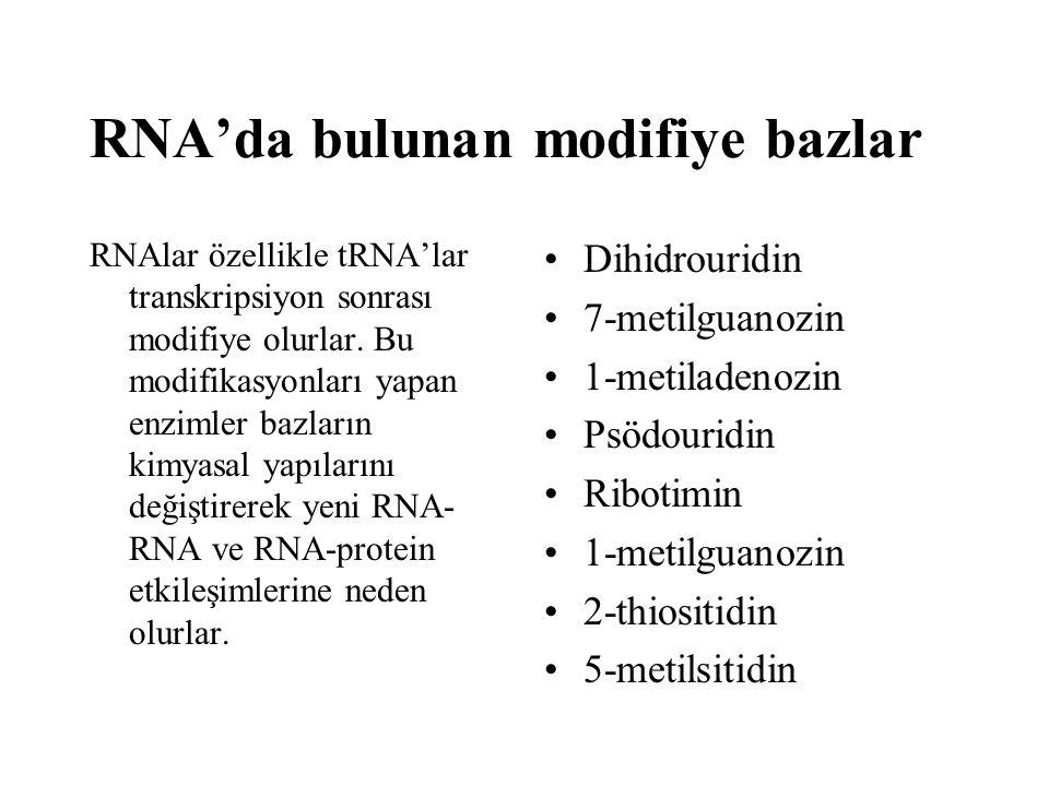 RNA'da bulunan modifiye bazlar
