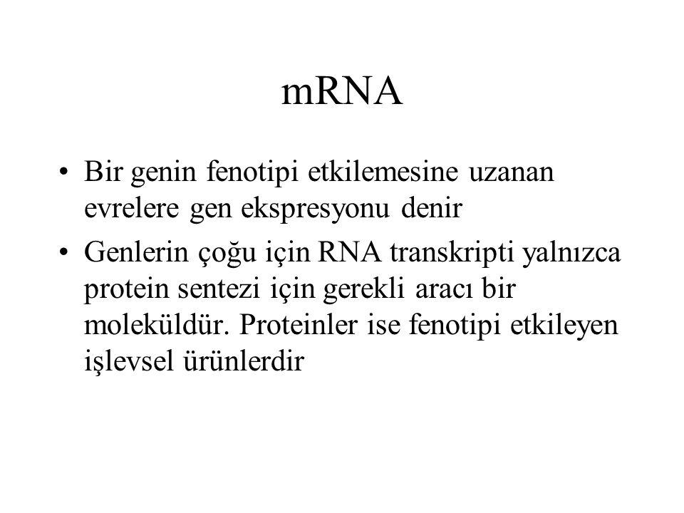 mRNA Bir genin fenotipi etkilemesine uzanan evrelere gen ekspresyonu denir.
