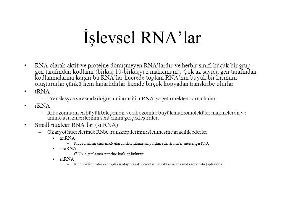 İşlevsel RNA'lar