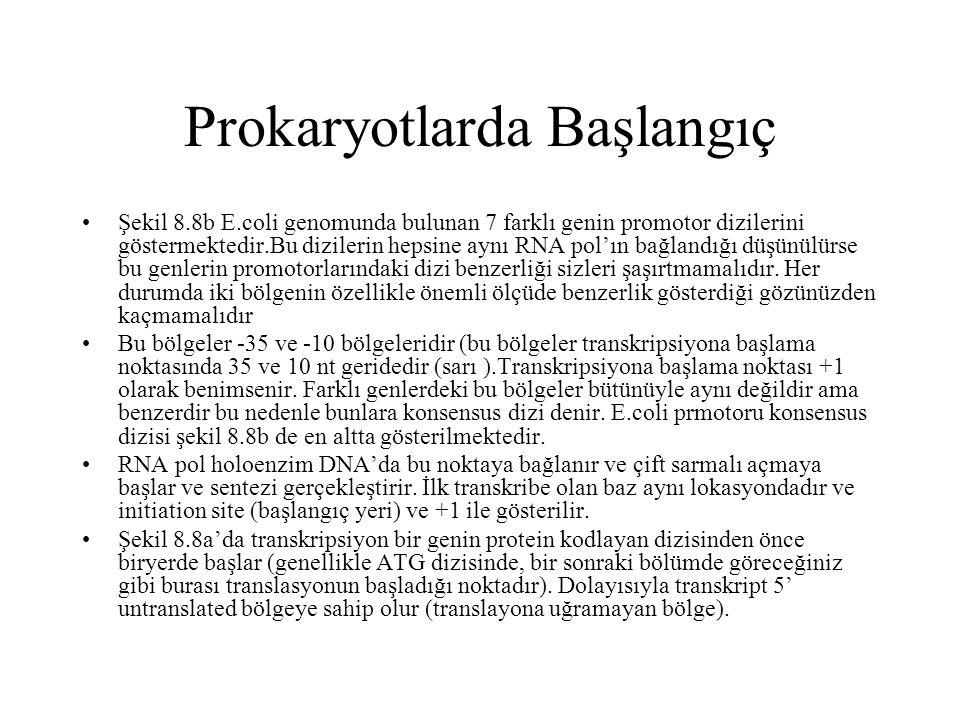 Prokaryotlarda Başlangıç