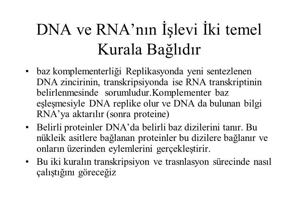 DNA ve RNA'nın İşlevi İki temel Kurala Bağlıdır