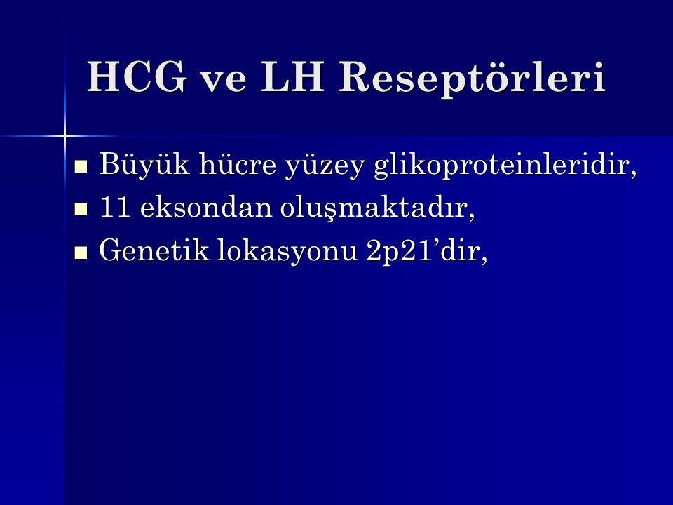 HCG ve LH Reseptörleri Büyük hücre yüzey glikoproteinleridir,