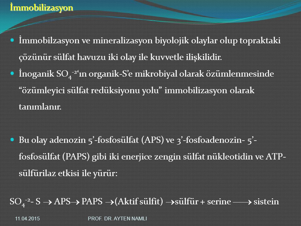 SO4-2- S  APS PAPS (Aktif sülfit) sülfür + serine  sistein