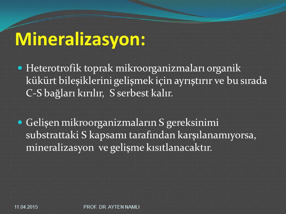 Mineralizasyon: