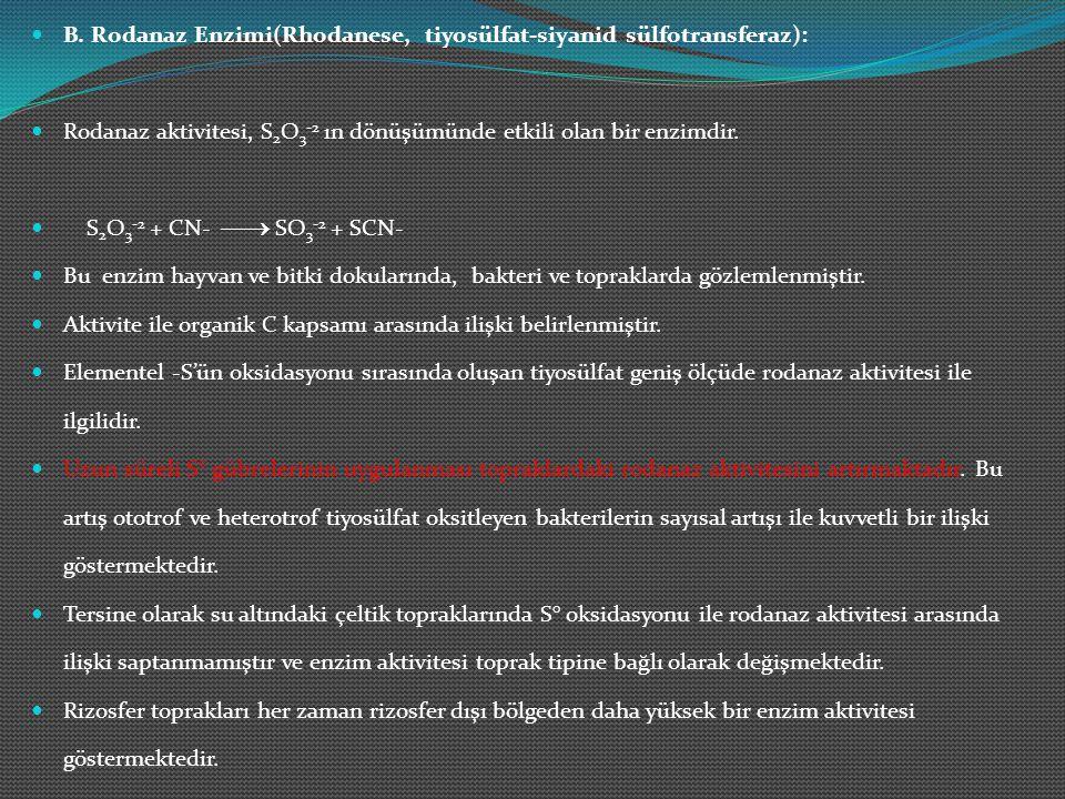 B. Rodanaz Enzimi(Rhodanese, tiyosülfat-siyanid sülfotransferaz):