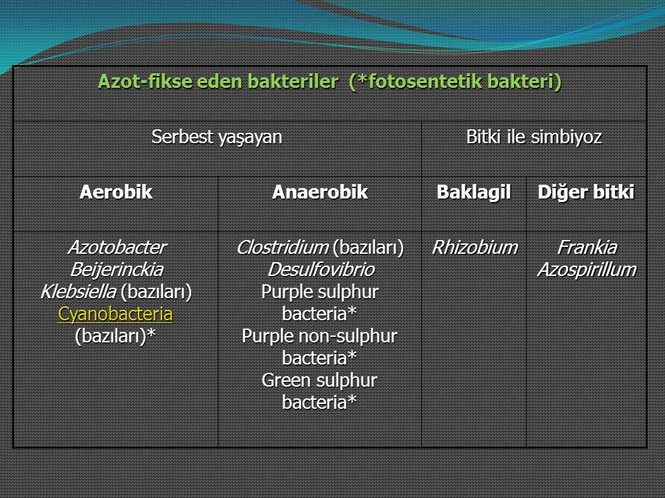 Azot-fikse eden bakteriler (*fotosentetik bakteri)