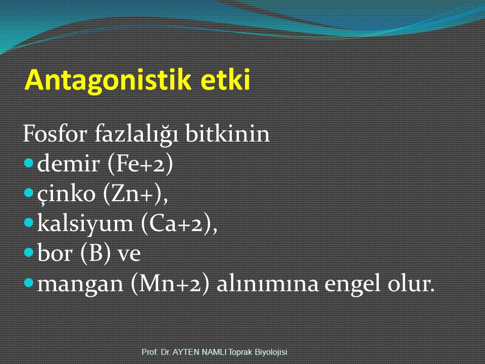 Antagonistik etki Fosfor fazlalığı bitkinin demir (Fe+2) çinko (Zn+),