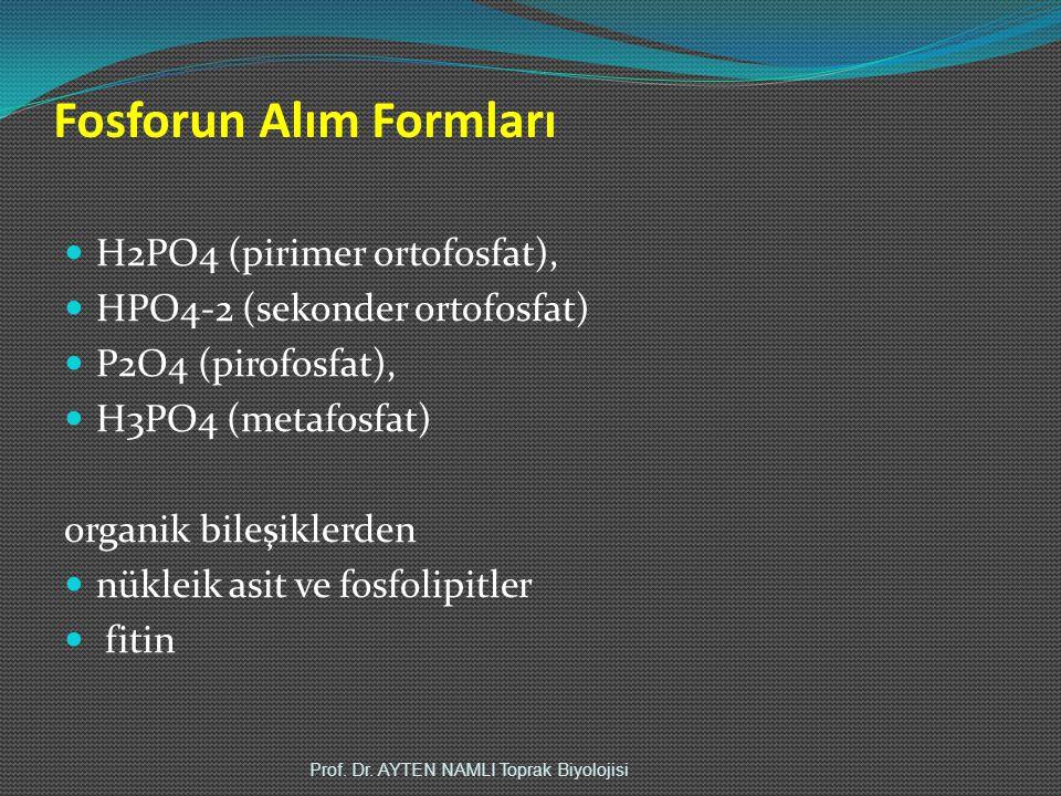 Fosforun Alım Formları