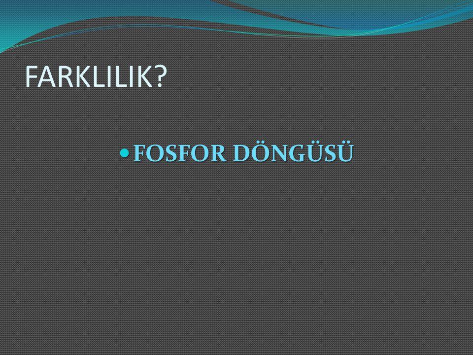 FARKLILIK FOSFOR DÖNGÜSÜ