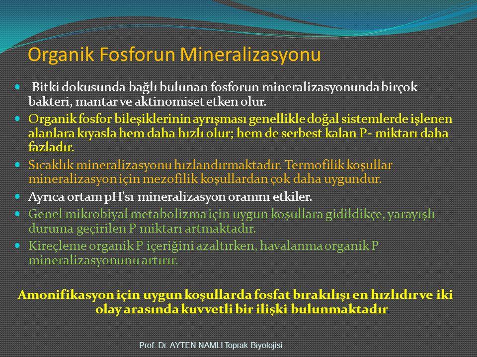 Organik Fosforun Mineralizasyonu