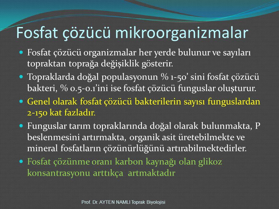 Fosfat çözücü mikroorganizmalar