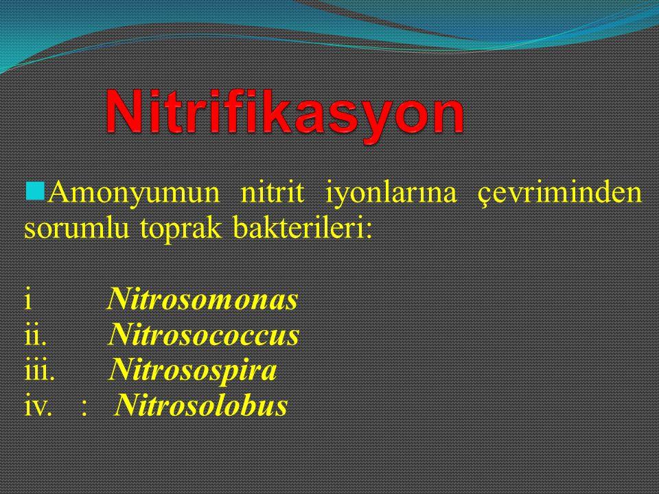 Amonyumun nitrit iyonlarına çevriminden sorumlu toprak bakterileri:
