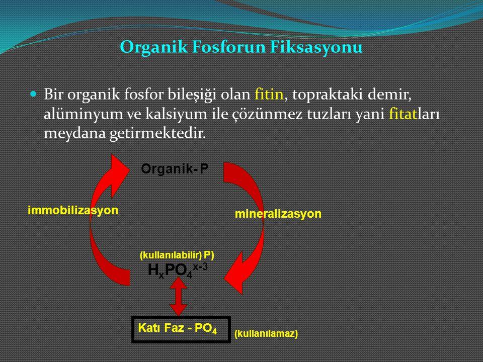 Organik Fosforun Fiksasyonu