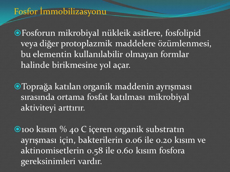 Fosfor İmmobilizasyonu