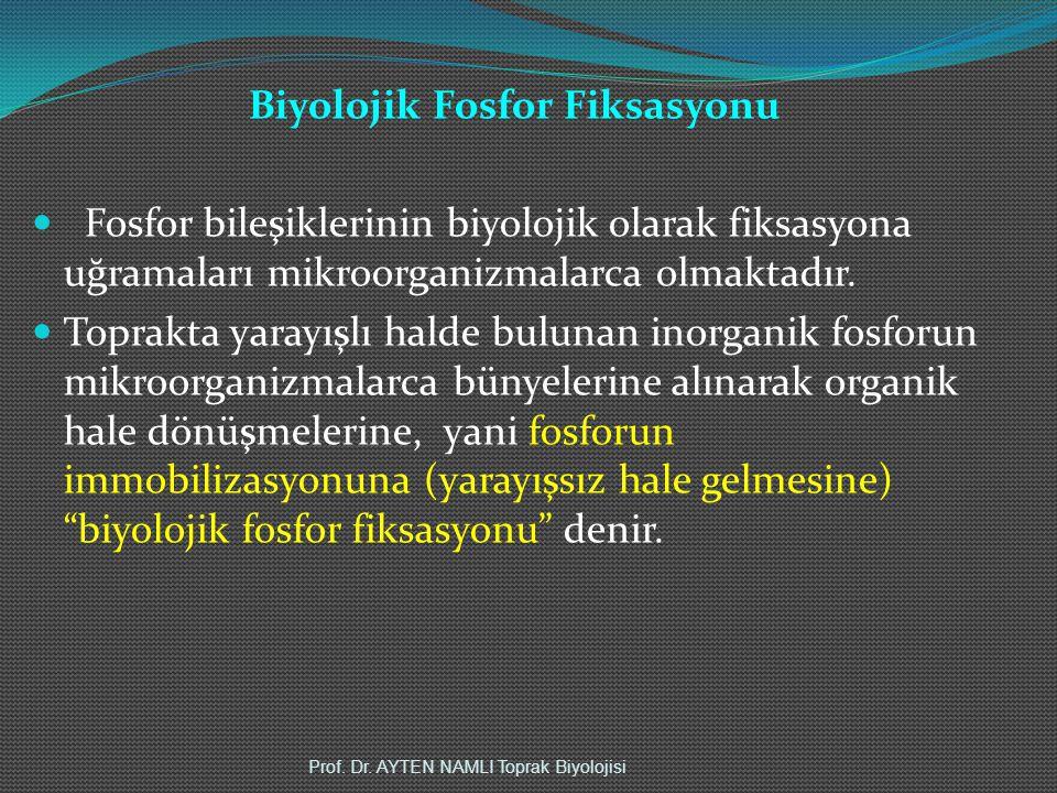 Biyolojik Fosfor Fiksasyonu