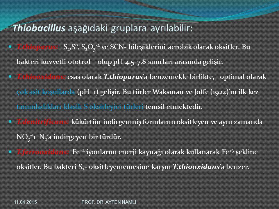 Thiobacillus aşağıdaki gruplara ayrılabilir: