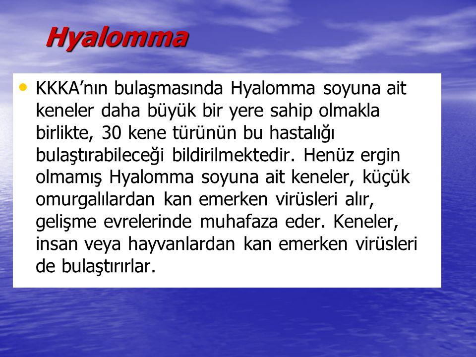 Hyalomma