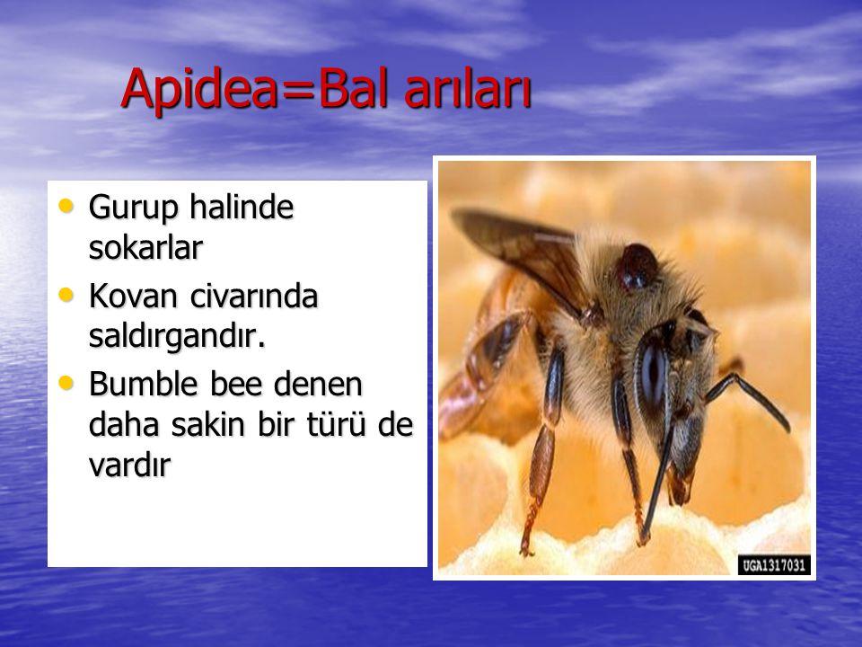 Apidea=Bal arıları Gurup halinde sokarlar