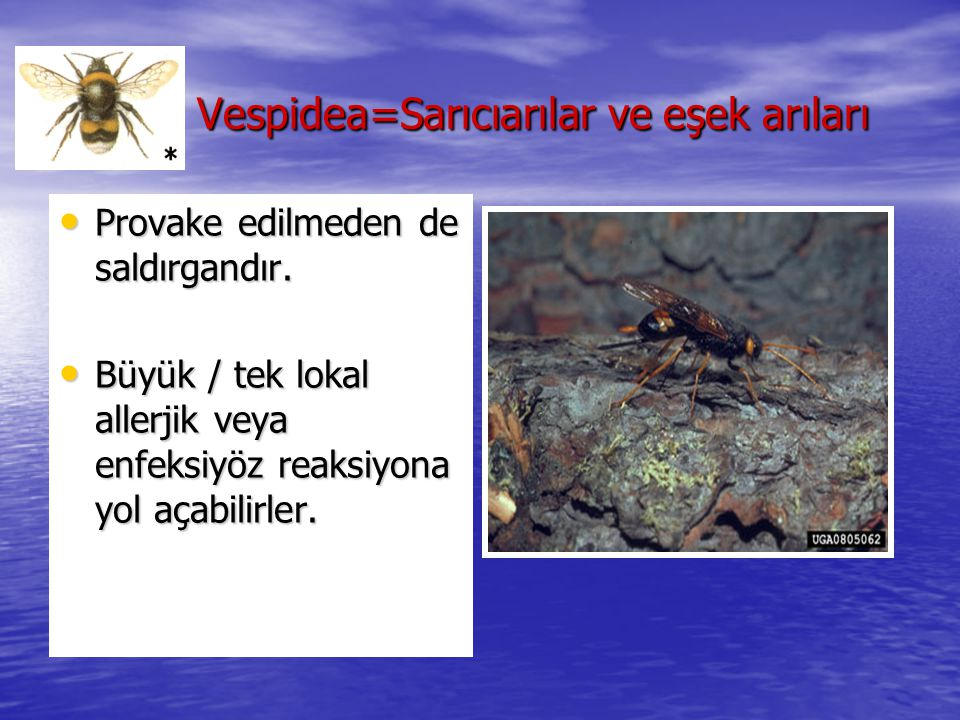 Vespidea=Sarıcıarılar ve eşek arıları