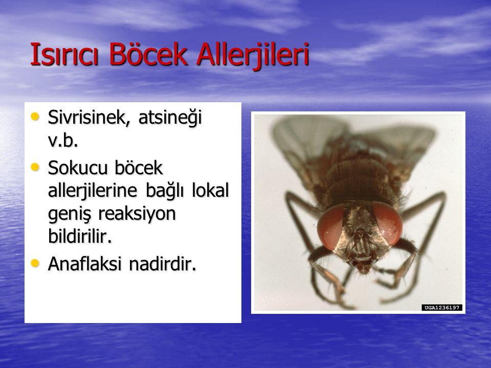 Isırıcı Böcek Allerjileri