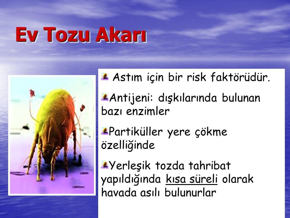 Ev Tozu Akarı Astım için bir risk faktörüdür.