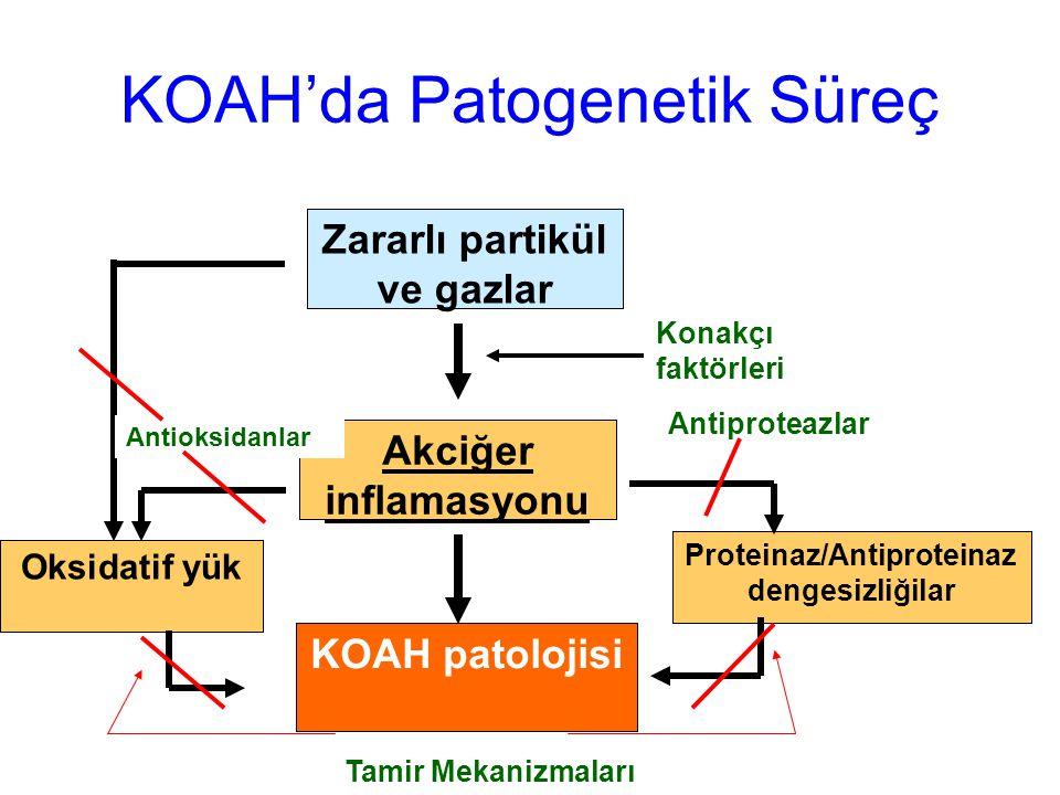 KOAH'da Patogenetik Süreç