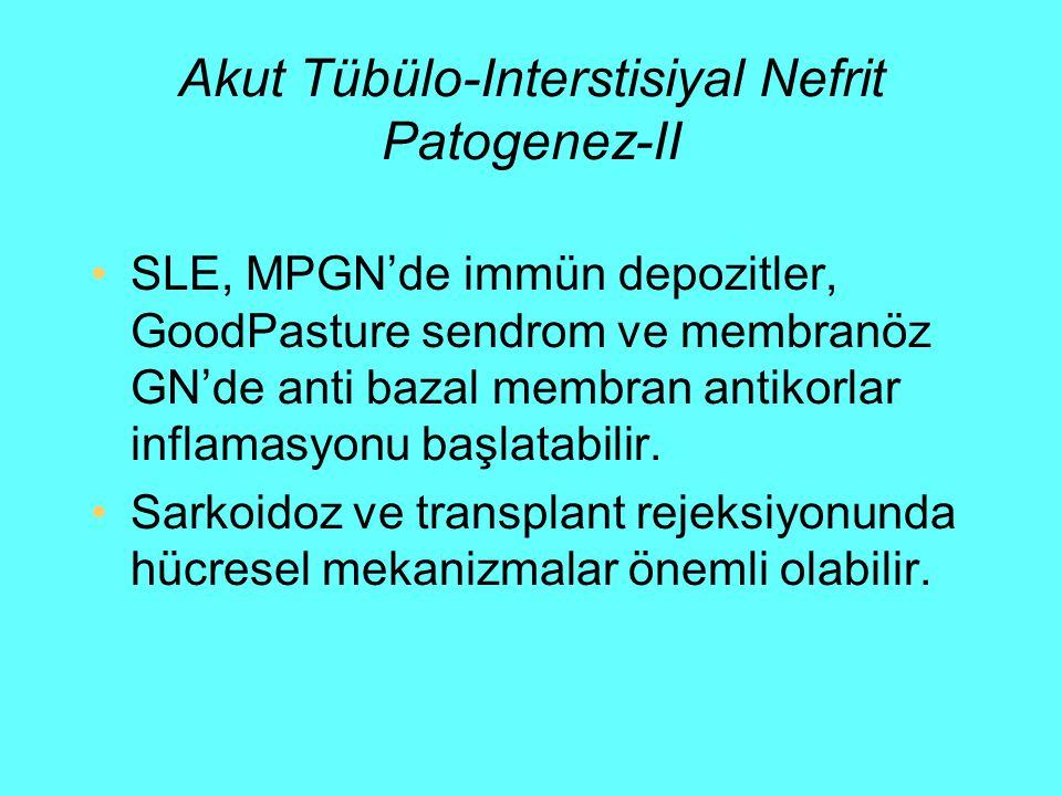 Akut Tübülo-Interstisiyal Nefrit Patogenez-II