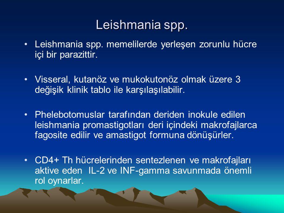 Leishmania spp. Leishmania spp. memelilerde yerleşen zorunlu hücre içi bir parazittir.