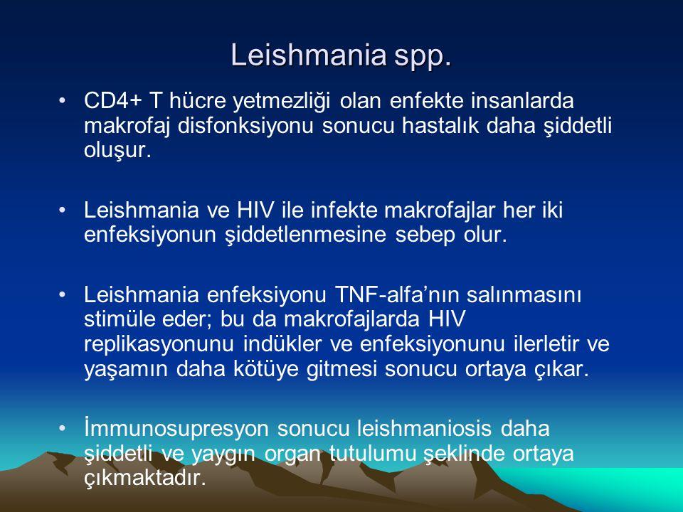 Leishmania spp. CD4+ T hücre yetmezliği olan enfekte insanlarda makrofaj disfonksiyonu sonucu hastalık daha şiddetli oluşur.