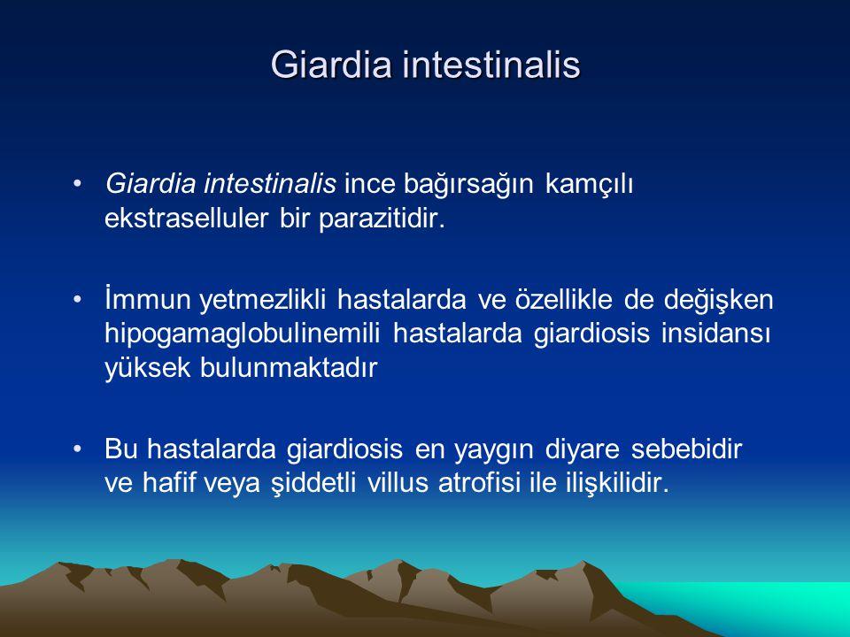 Giardia intestinalis Giardia intestinalis ince bağırsağın kamçılı ekstraselluler bir parazitidir.