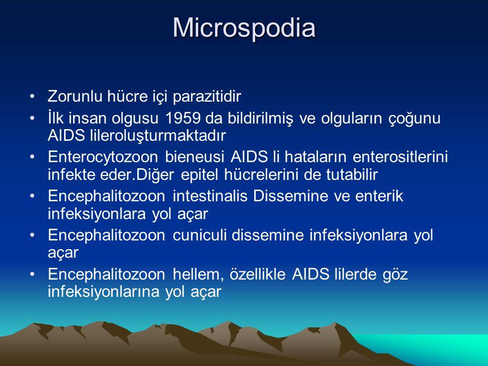Microspodia Zorunlu hücre içi parazitidir