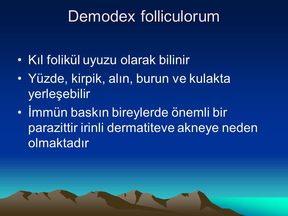 Demodex folliculorum Kıl folikül uyuzu olarak bilinir