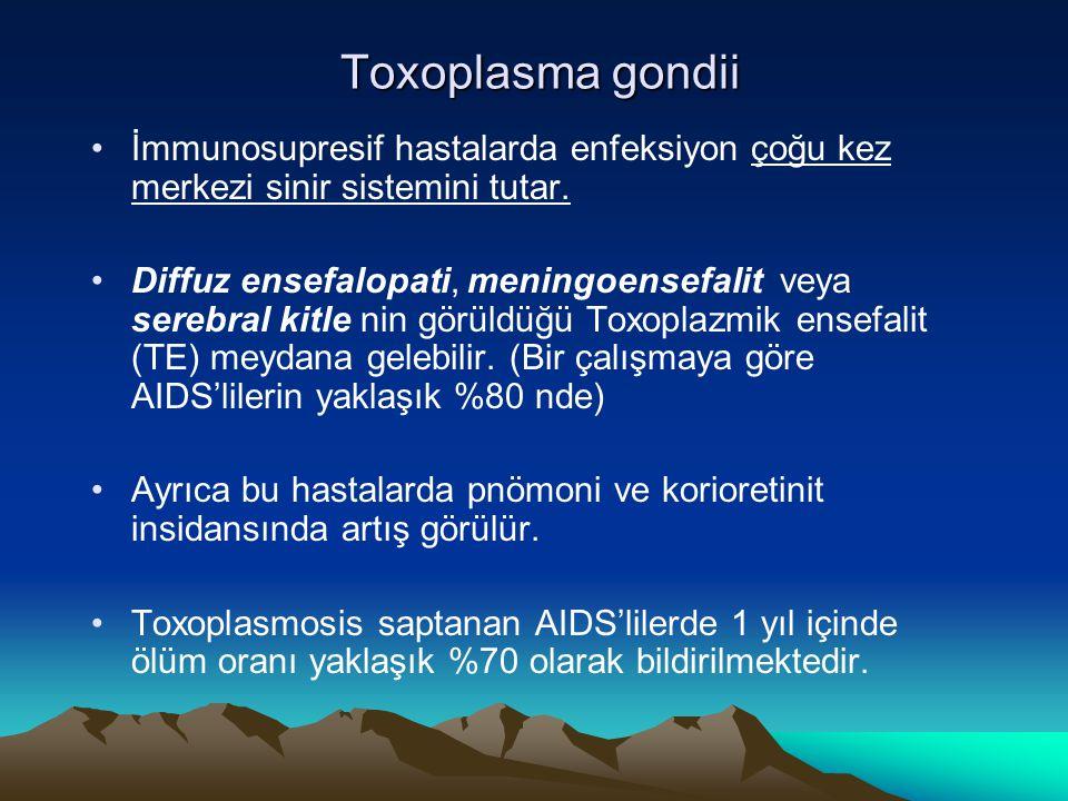 Toxoplasma gondii İmmunosupresif hastalarda enfeksiyon çoğu kez merkezi sinir sistemini tutar.