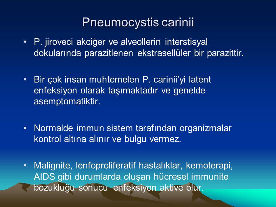 Pneumocystis carinii P. jiroveci akciğer ve alveollerin interstisyal dokularında parazitlenen ekstrasellüler bir parazittir.