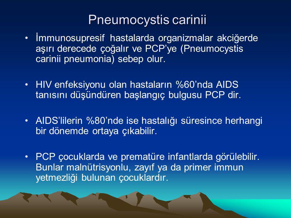 Pneumocystis carinii İmmunosupresif hastalarda organizmalar akciğerde aşırı derecede çoğalır ve PCP'ye (Pneumocystis carinii pneumonia) sebep olur.