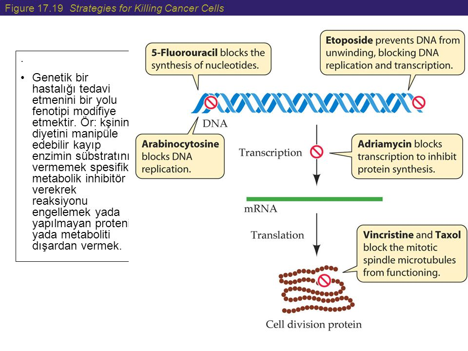 Figure 17.19 Strategies for Killing Cancer Cells