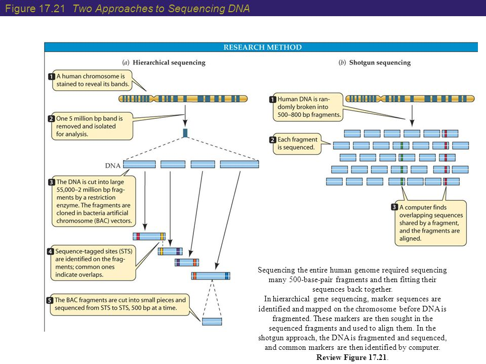 Figure 17.21 Two Approaches to Sequencing DNA