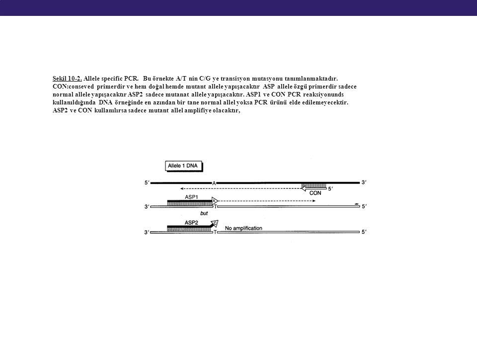 Şekil 10-2. Allele specific PCR