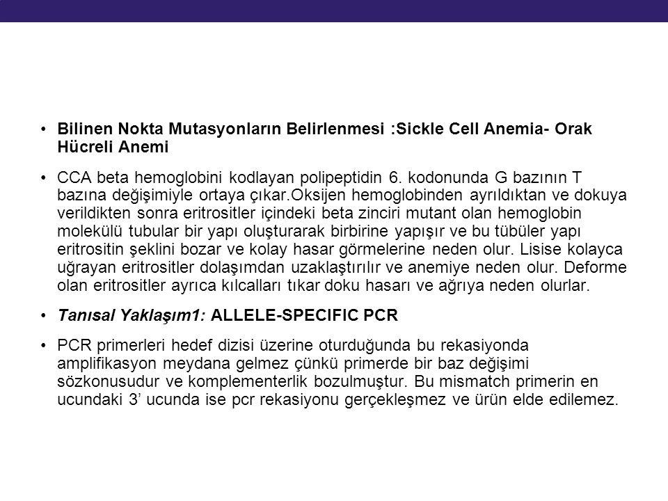 Bilinen Nokta Mutasyonların Belirlenmesi :Sickle Cell Anemia- Orak Hücreli Anemi